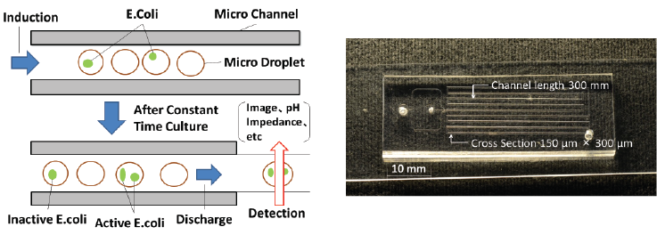 Measurement method (left) and microchannel chip (right) to monitor bacteria culture in droplets
