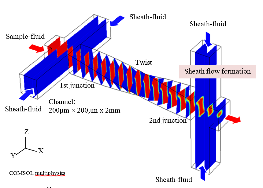 Numerical simulation of the sheath flow formation in the twisted microfluidic channel